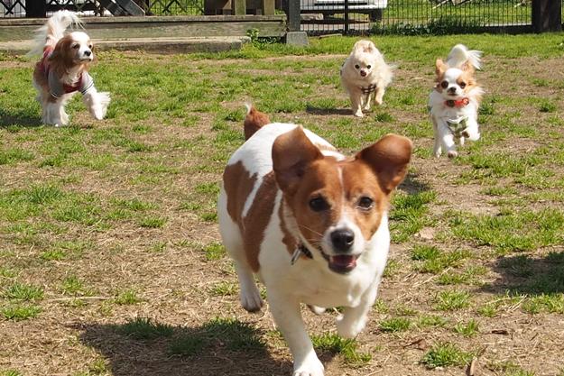 犬の寺子屋ようちえんのイメージ